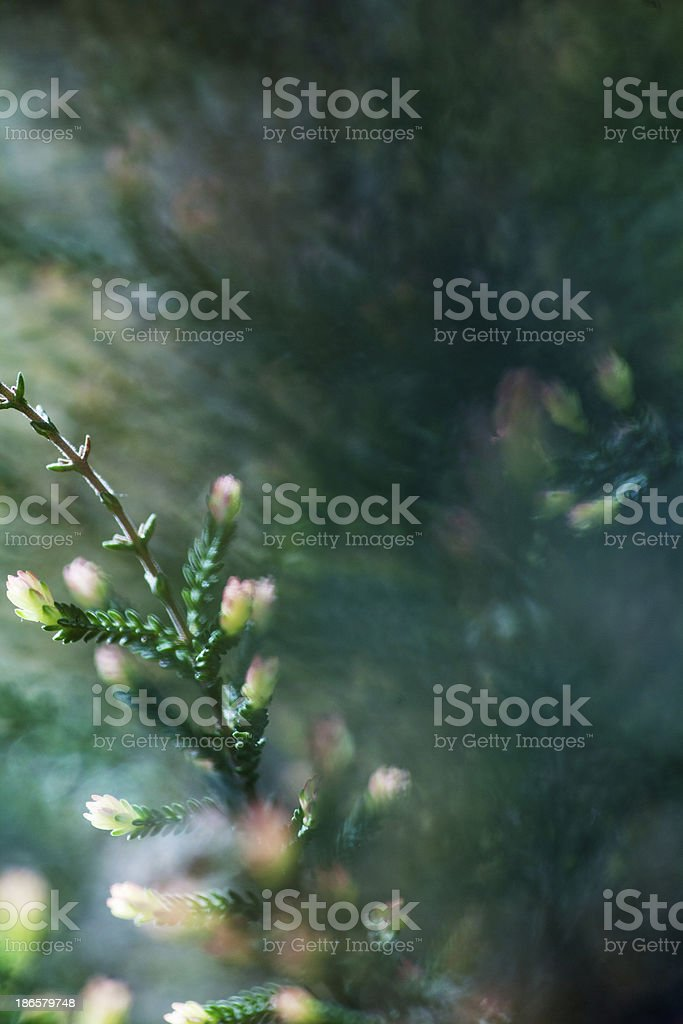 Delicate colorful plant royalty-free stock photo
