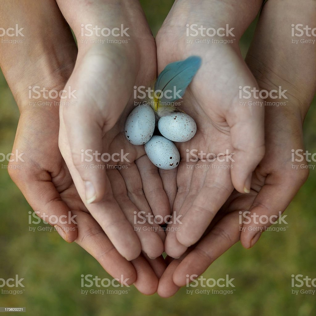 Delicate Eggs stock photo