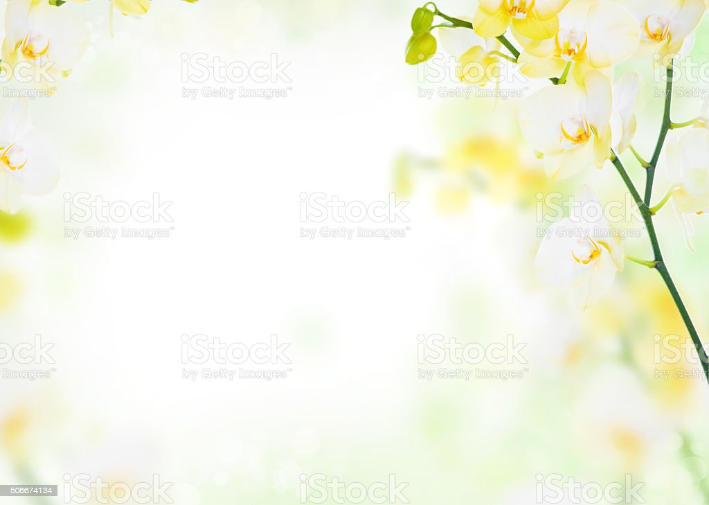 Delicate flower background of yellow orchids stock photo
