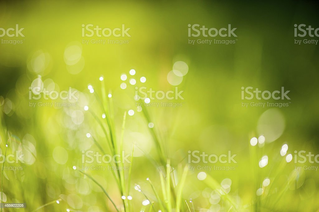 A delicate grass background in the sunlight stock photo