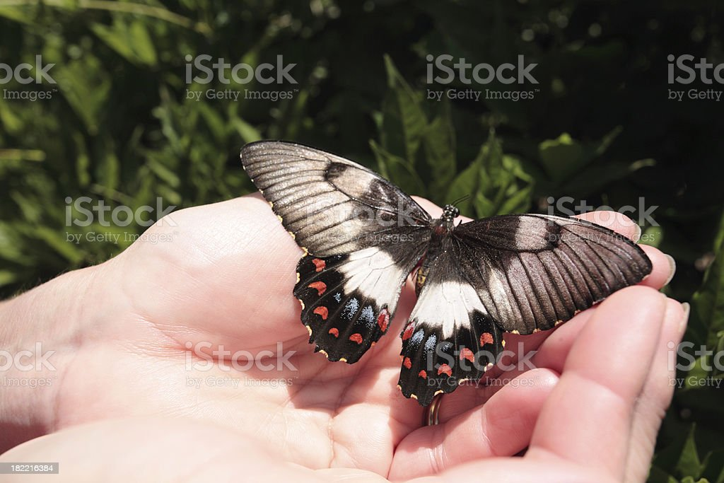 delicate nature royalty-free stock photo