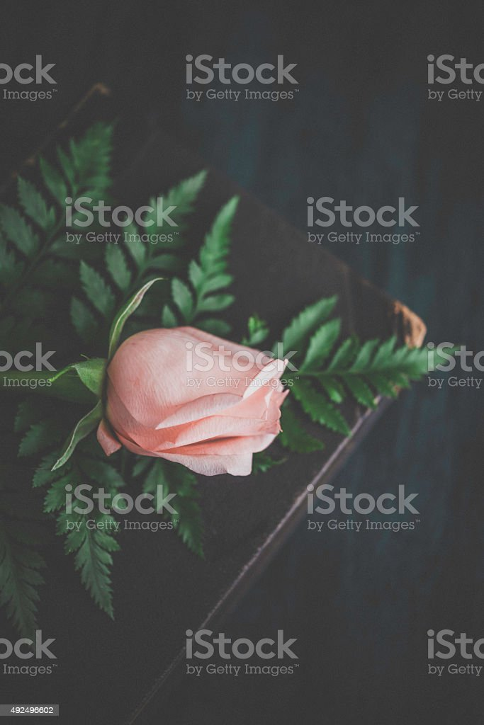Delicate pink rose bud with ferns on antique book stock photo