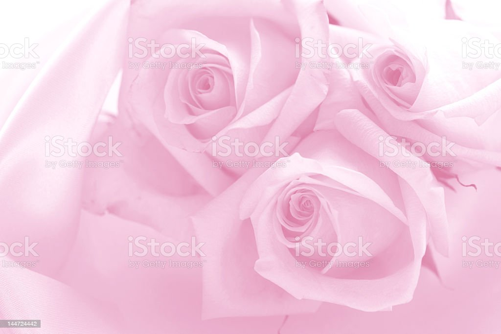 delicate pink roses royalty-free stock photo
