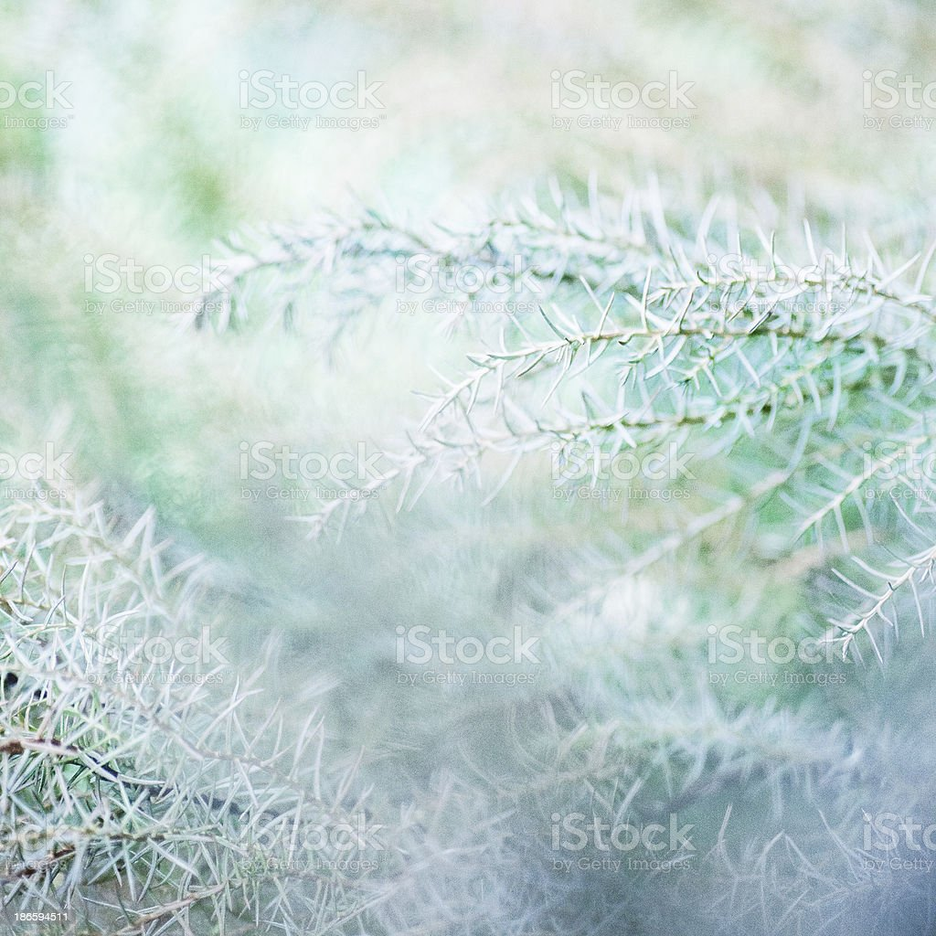 Delicate plants royalty-free stock photo