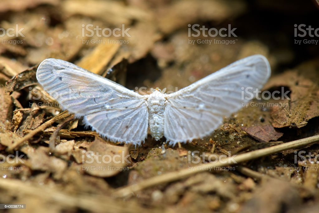 Delicate white butterfly on the forest floor stock photo