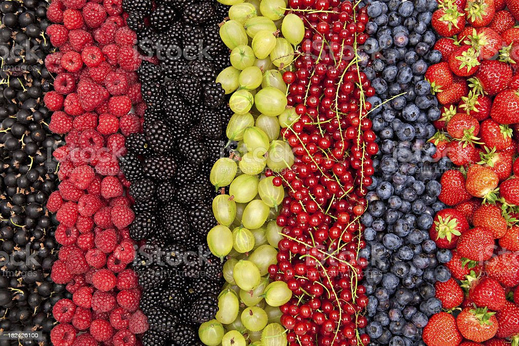 delicious fresh berries in a row stock photo