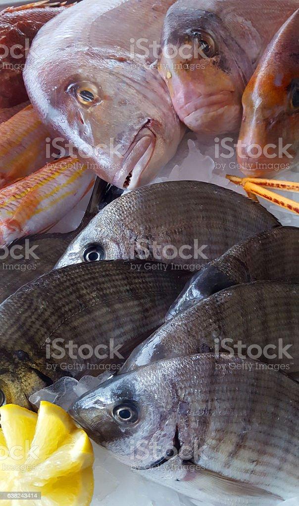 delicious fresh fish on ice -  porgy, dentex stock photo