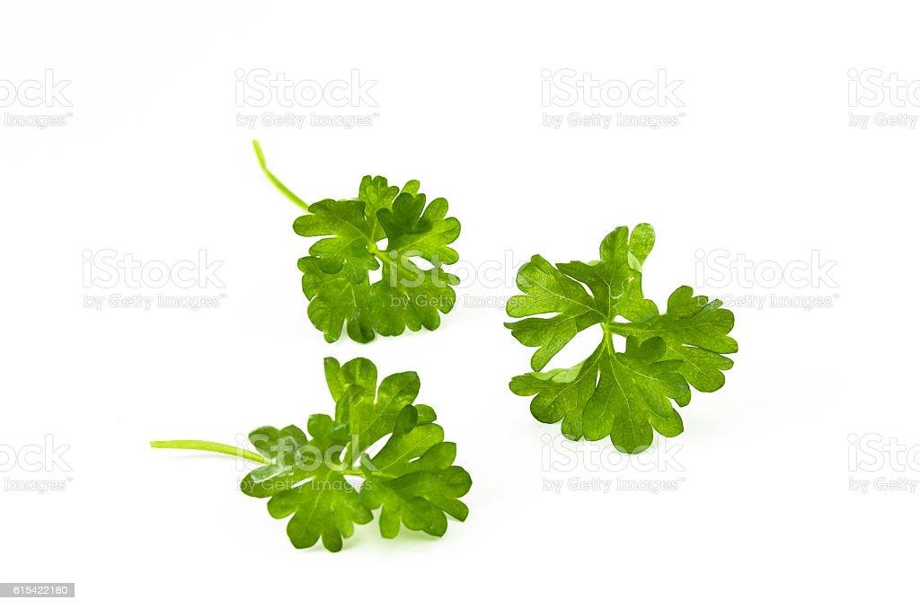 Delicious fresh green parsley on white background stock photo