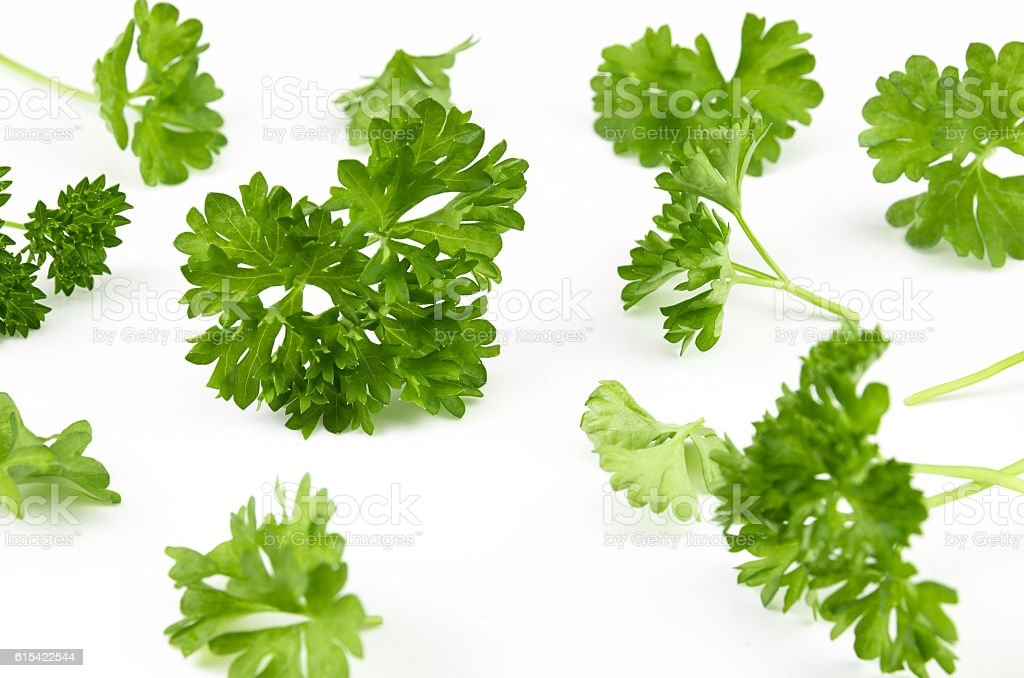 Delicious fresh green parsley on white background stock photo