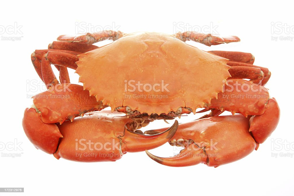 Delicious Mud Crab stock photo