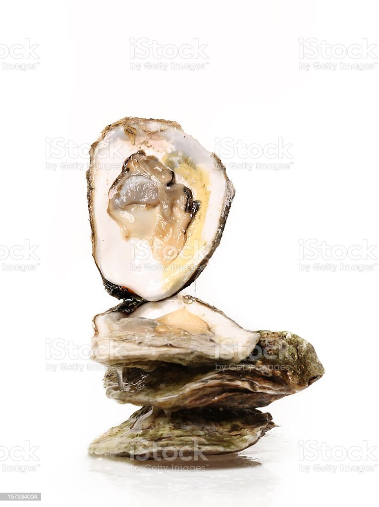 Delicious oysters stock photo