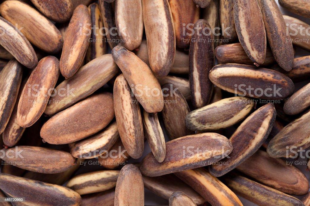 Delonix regia (Royal Poinciana) seed stock photo