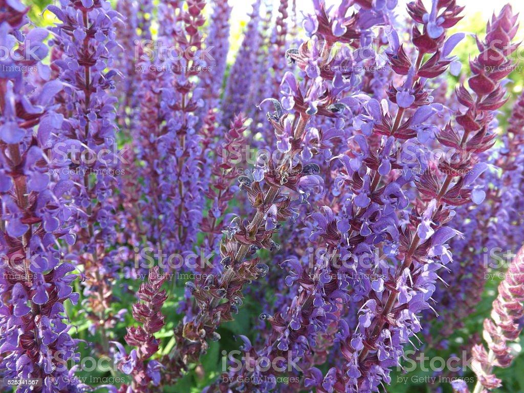 Delphiniums stock photo