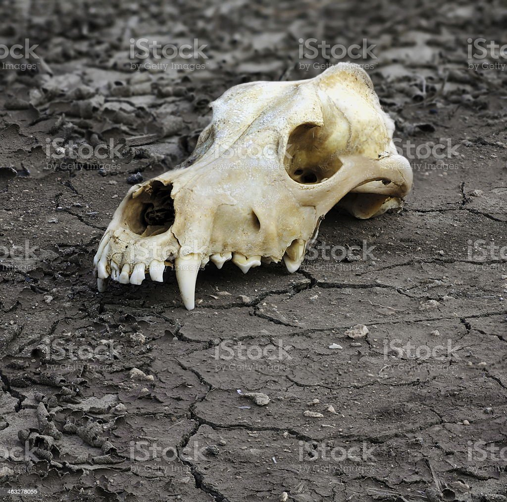 demise of ecological system stock photo