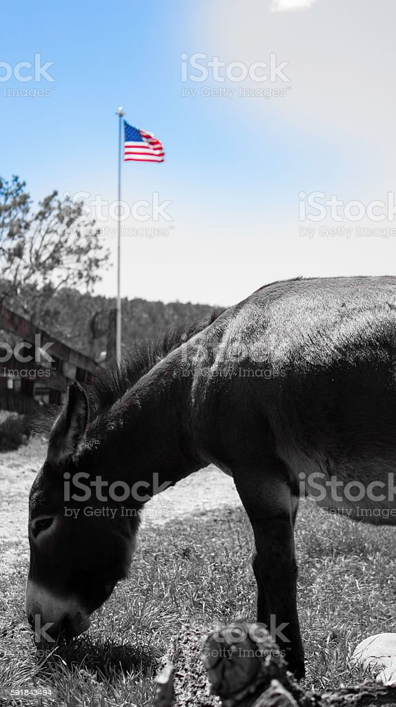 Democrat Donkey in front of flag stock photo