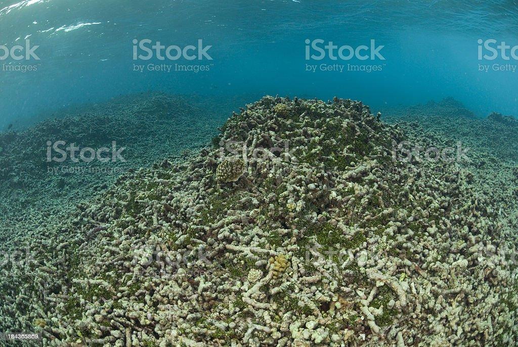demolished reef stock photo