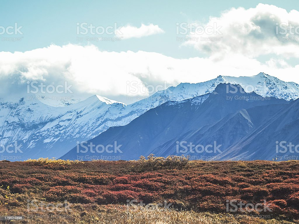 Denali national park royalty-free stock photo