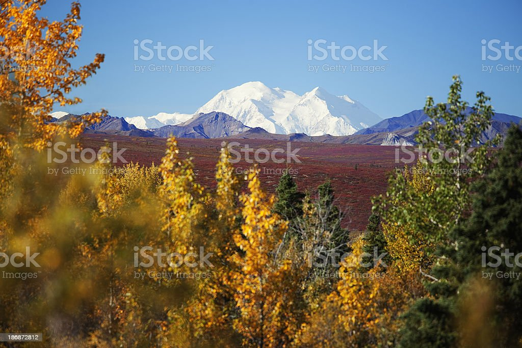 Denali National Parks Mt. McKinley, framed by autumn colored trees stock photo