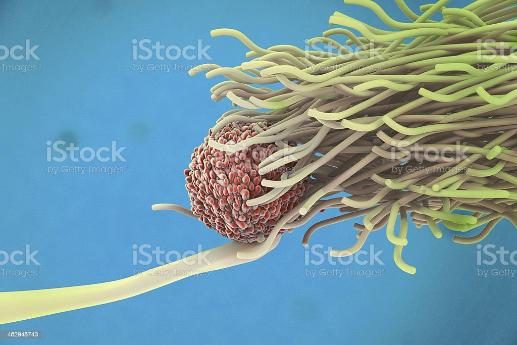 Dendritic cell and lymphocyte stock photo