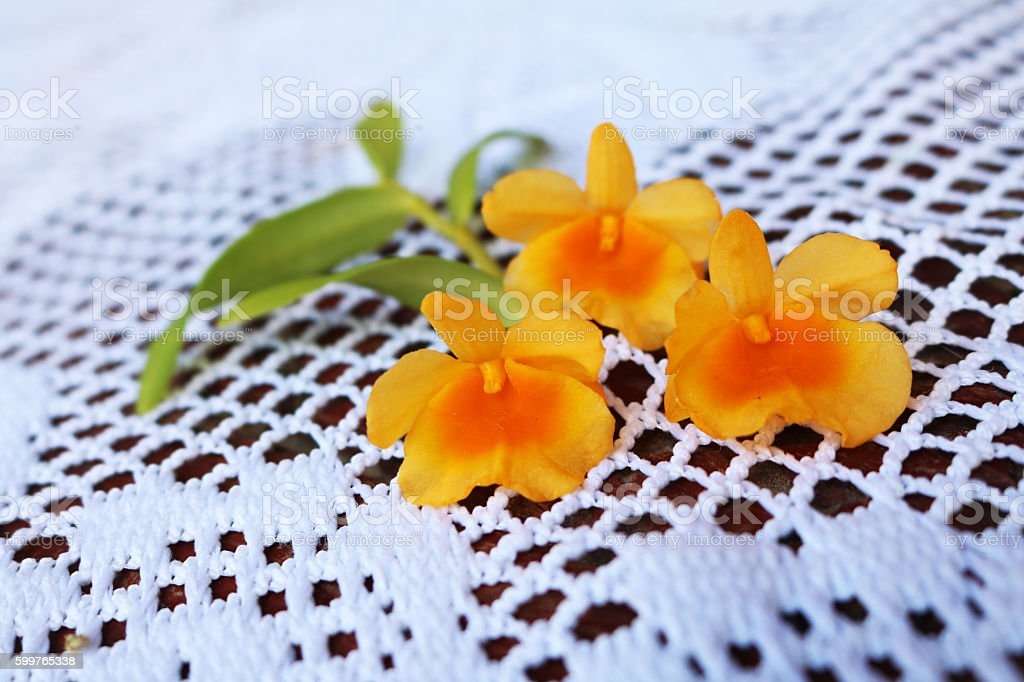 Dendrobium lindleyi Steud Orchid. stock photo
