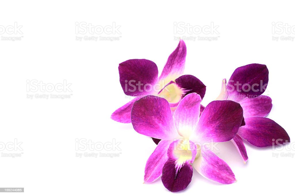 Dendrobium Phalaenopsis royalty-free stock photo