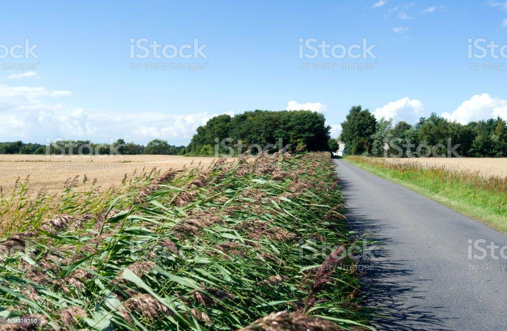 Denmark: Reed overgrown ditch on Laesoe island stock photo