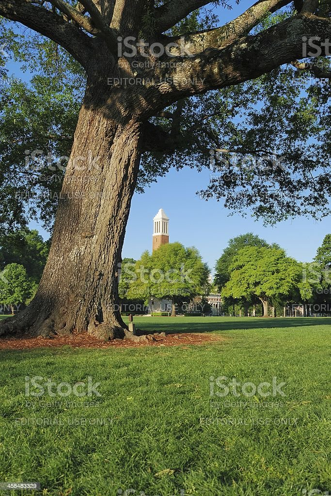 Denny Chimes behind leaning tree stock photo