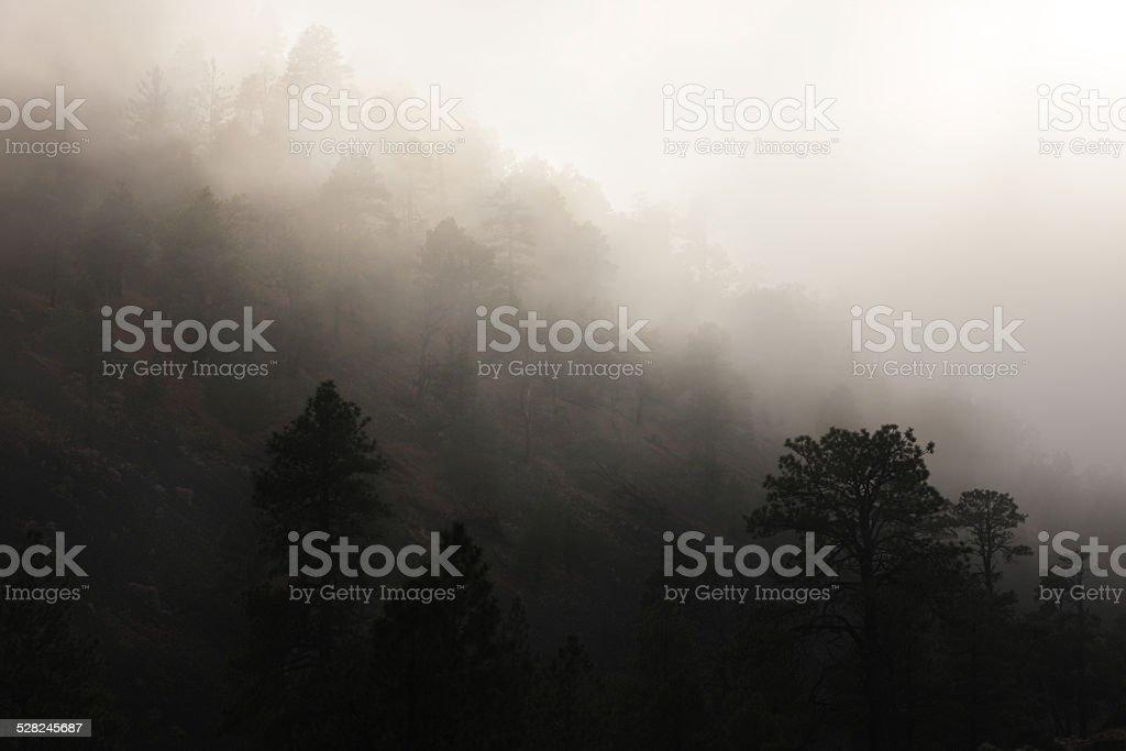 Dense Fog Mountain Slope stock photo