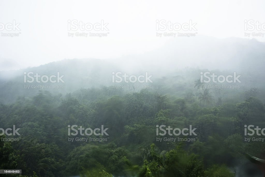 dense forest with heavy rains landscape shot through grass window royalty-free stock photo