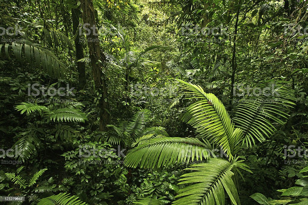 Dense Jungle Scene stock photo
