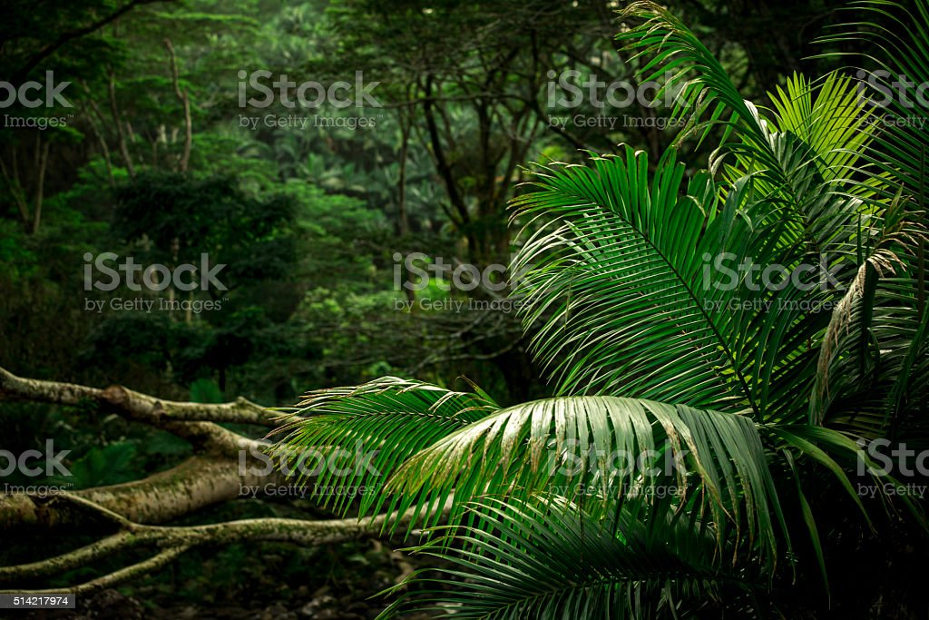 Dense Jungle Scene stock photo