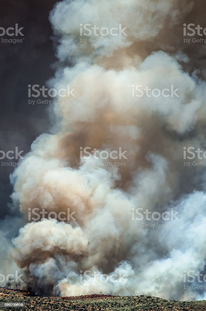 Dense White Smoke Rising from the Raging Wildfire stock photo
