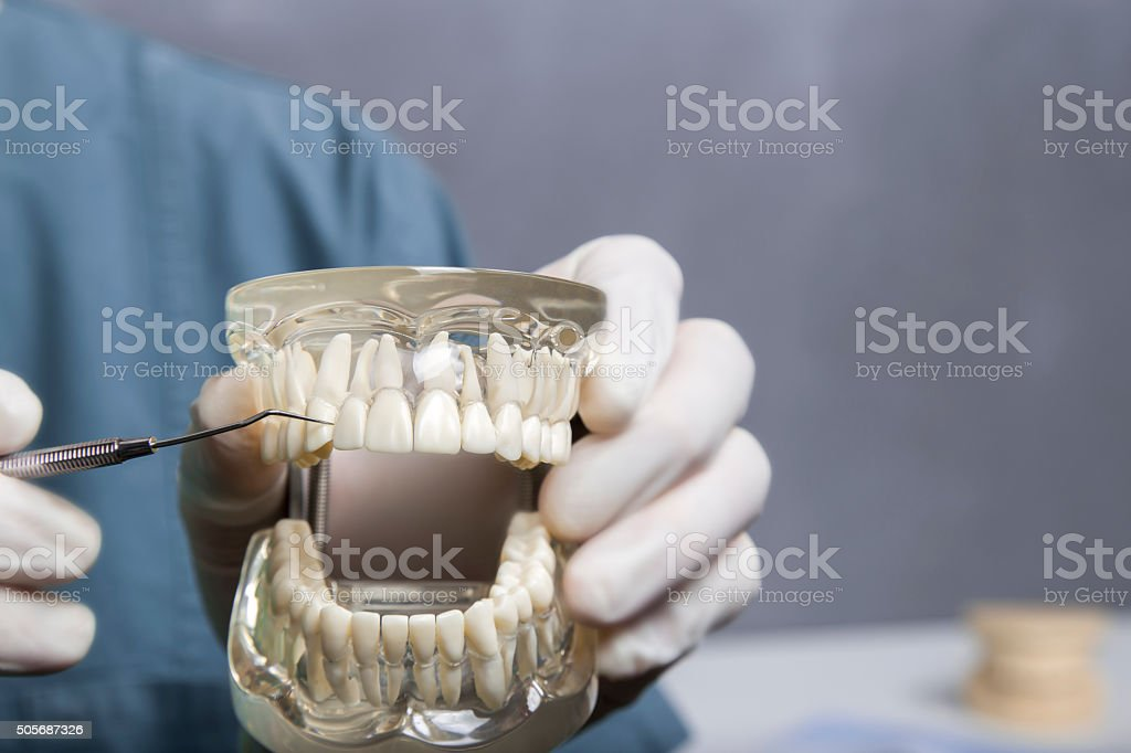Dental cleaning demonstration with model stock photo