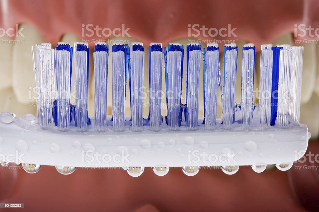 Dental mold and toothbrush 3 royalty-free stock photo