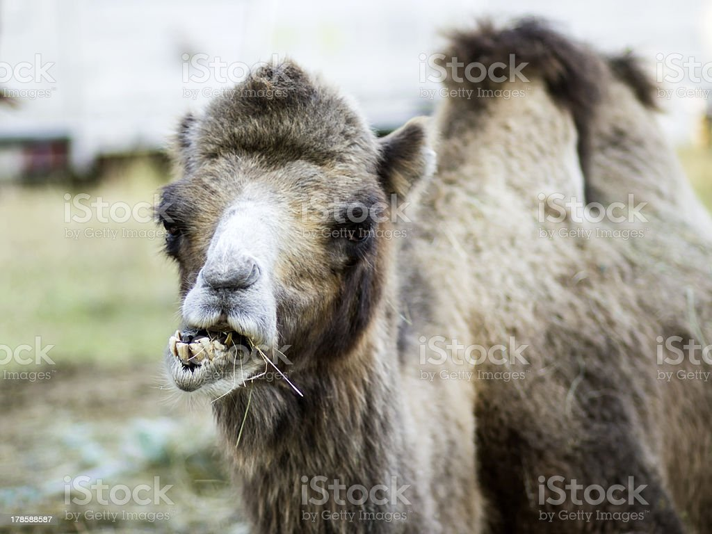 dental problems royalty-free stock photo
