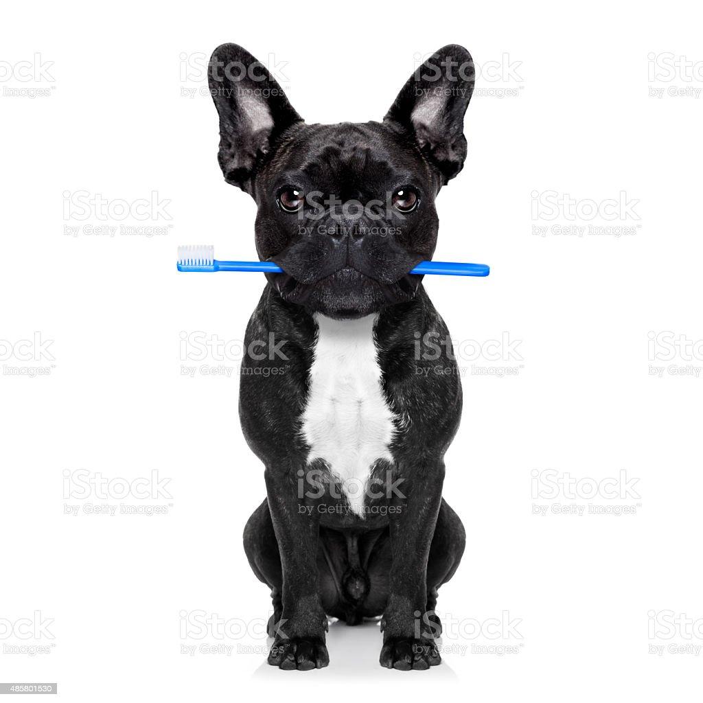 dental toothbrush dog stock photo