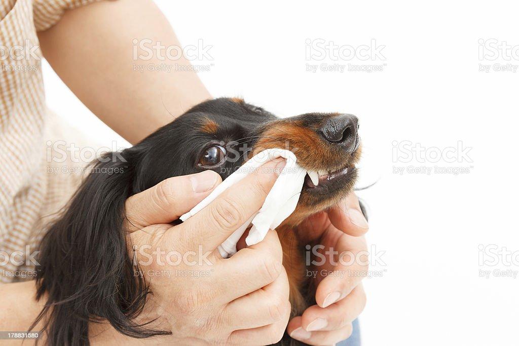 Dentifrice stock photo