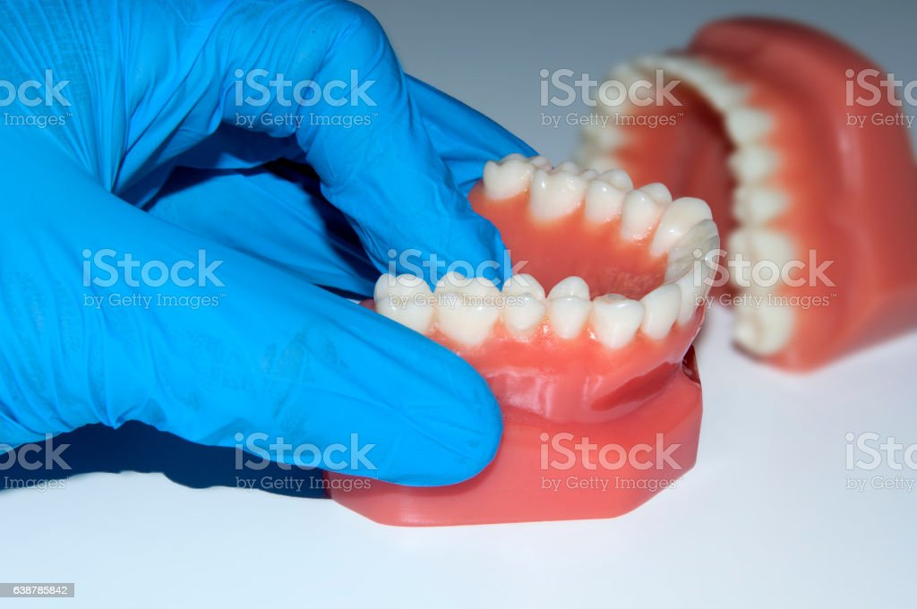 dentist hand show dental teeth model jaw in laboratory stock photo