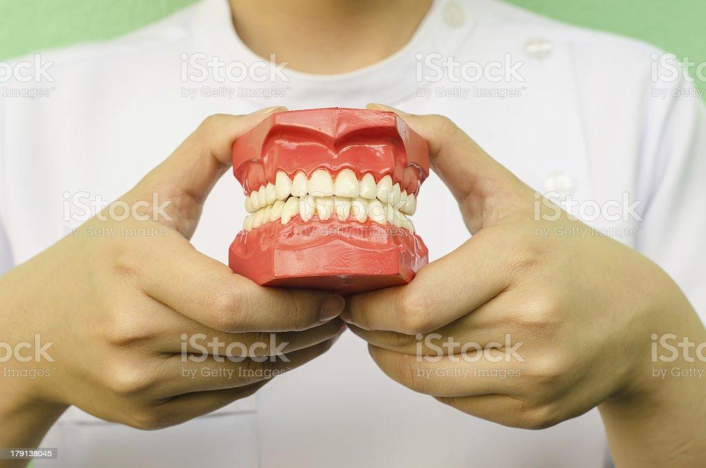 Dentist holding a teeth model royalty-free stock photo