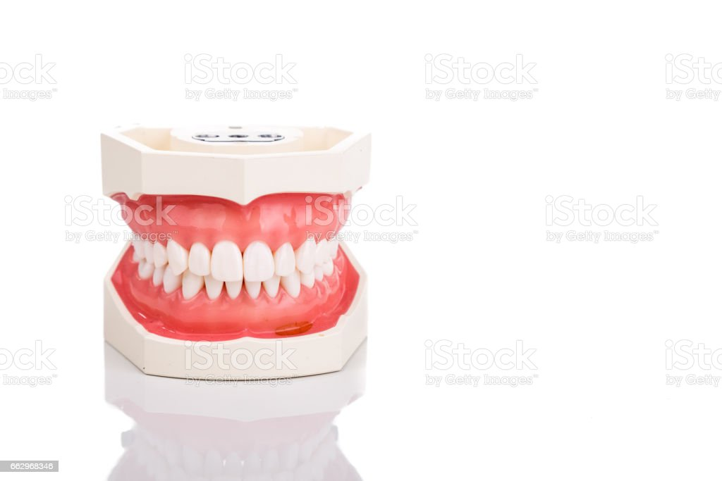 Dentist orthodontic teeth model with jaw closed stock photo