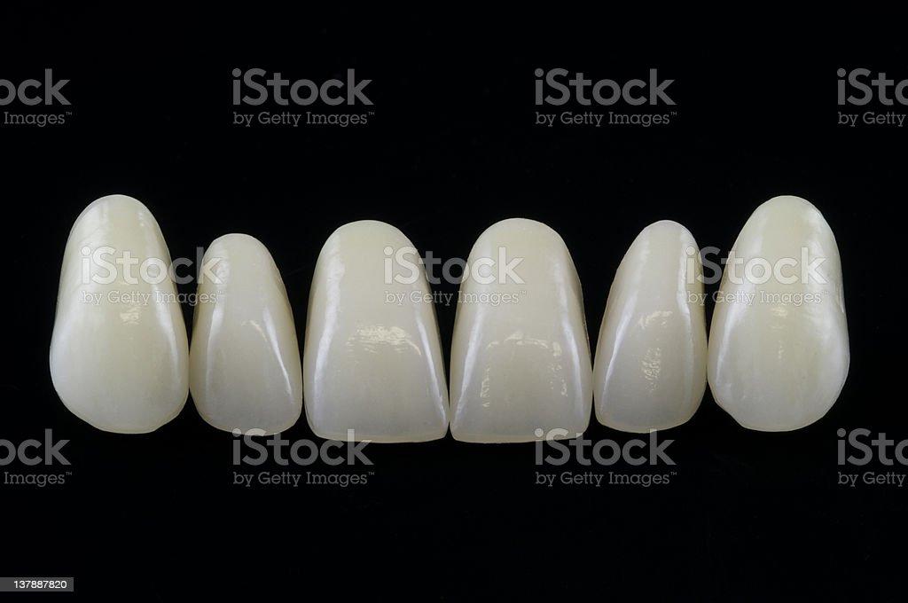 Denture teeth royalty-free stock photo