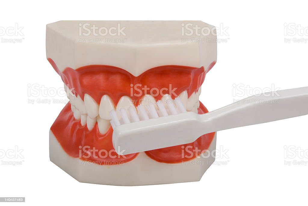 dentures, brush your teeth royalty-free stock photo