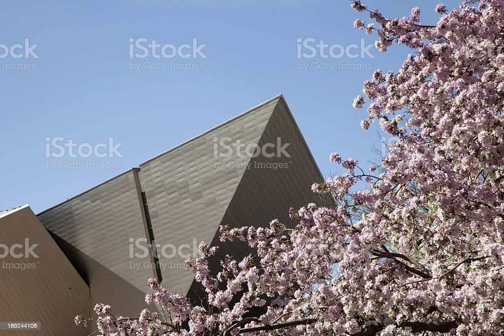 Denver Art Museum architecture and pink blossoms stock photo