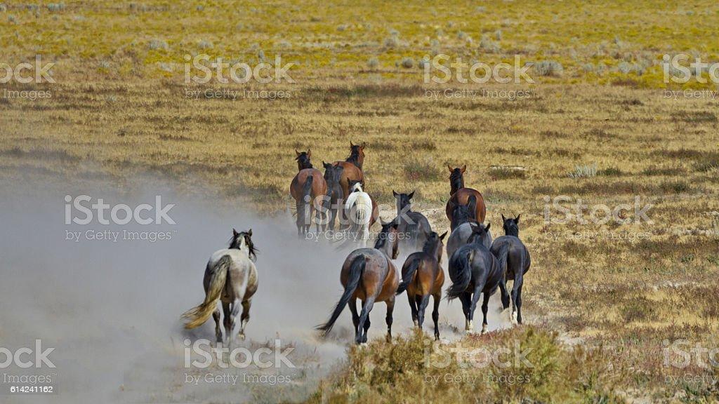 Departing herd of wild horses stock photo