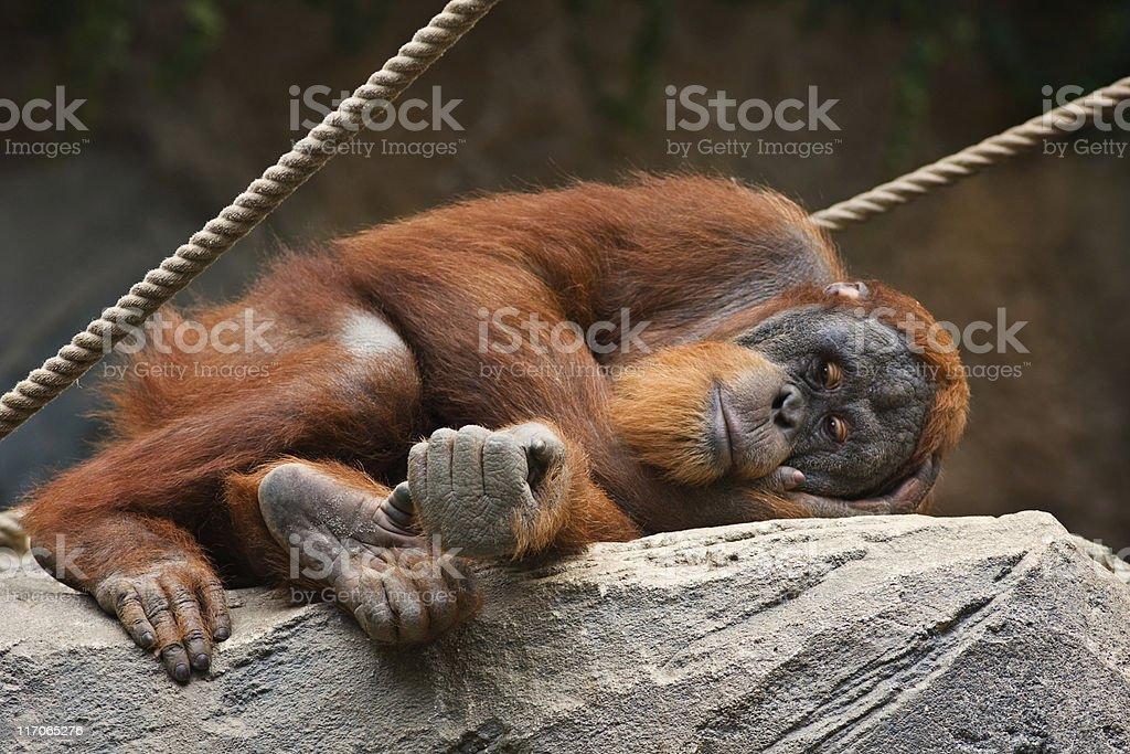 depressive monkey stock photo