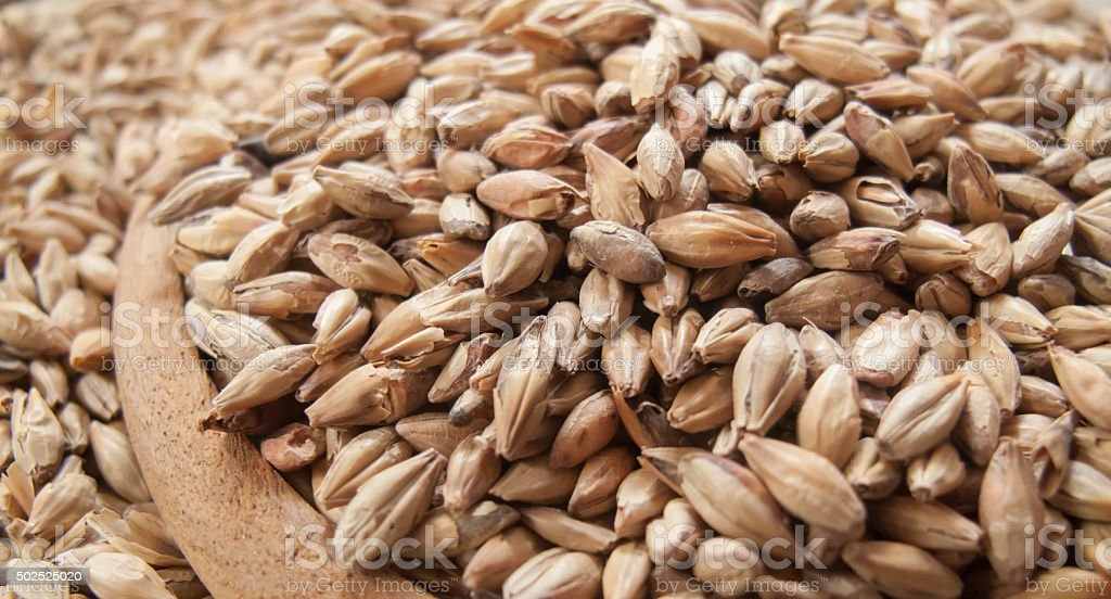 Depth of field Close up Beer ingredients, Pale ale malt stock photo