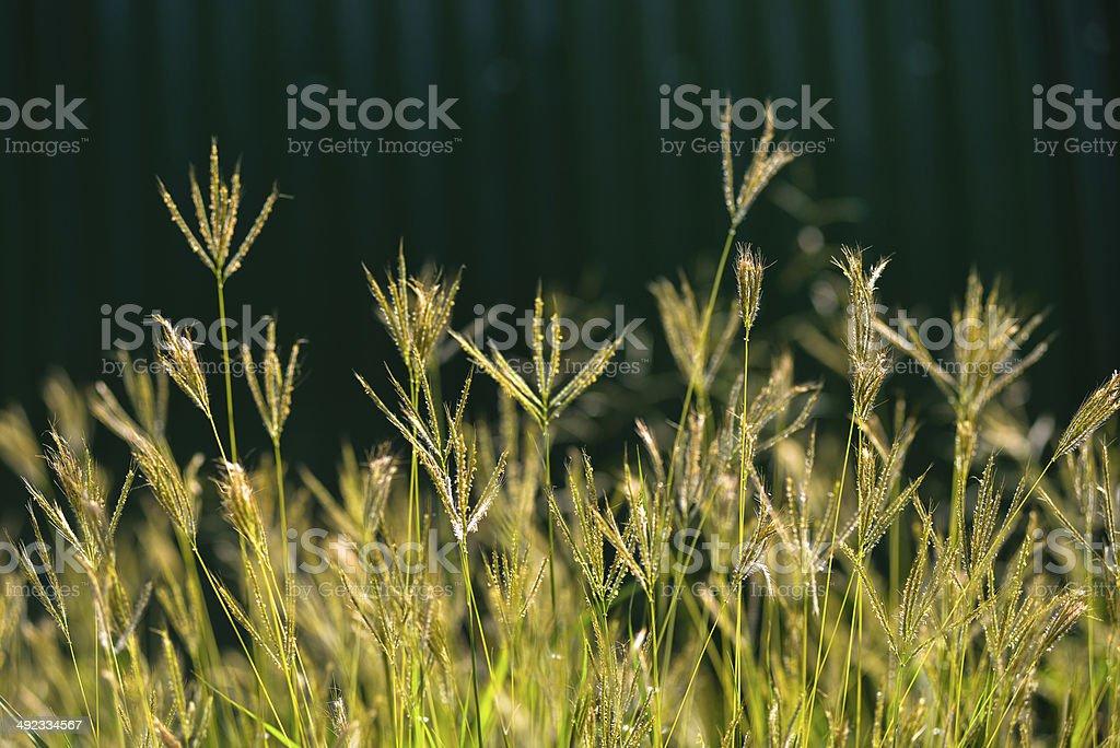 Depth of field the flower grass stock photo