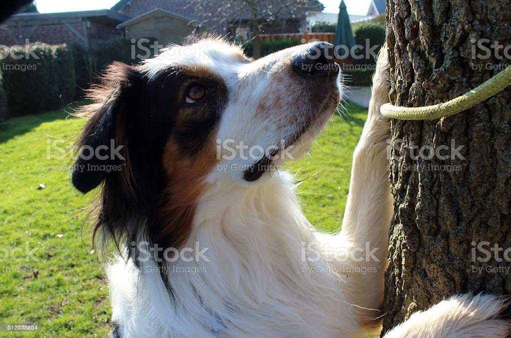 der neugierige Hund stock photo