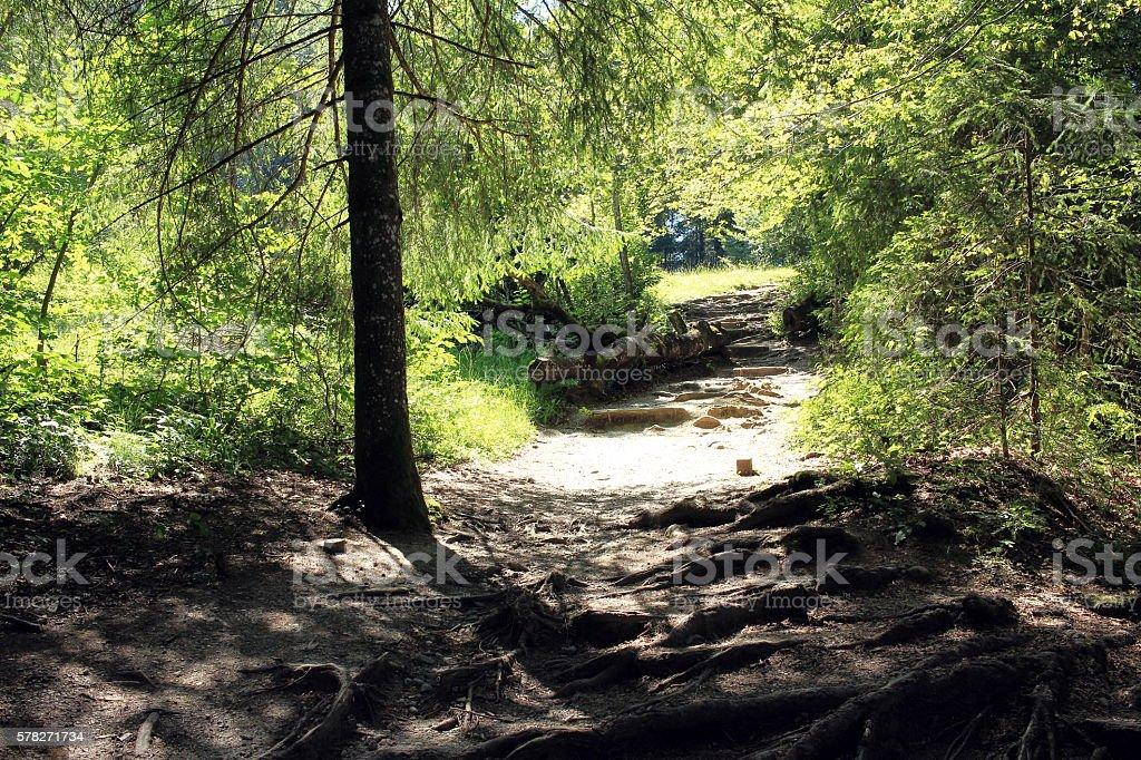 der Wanderweg stock photo