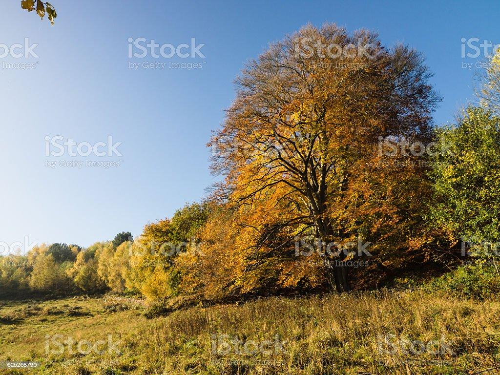 Derbyshire Autumn stock photo